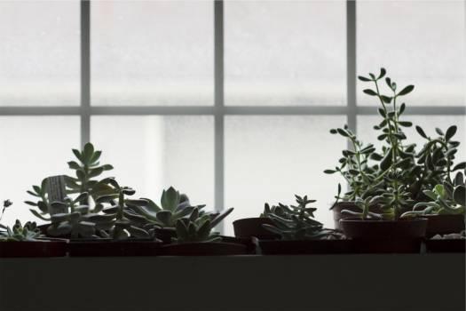 pots plants  #21777