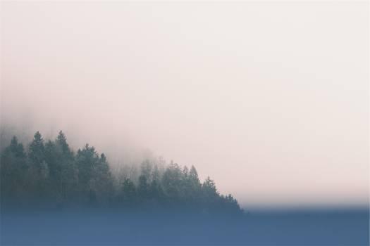 trees fog sky  Free Photo