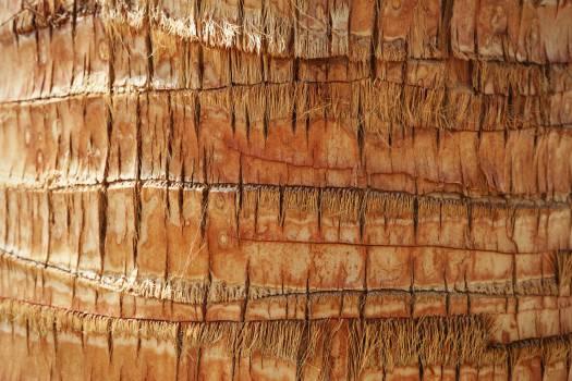 palm tree tree trunk bark  #21839