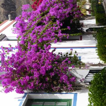Garden Summer Flowers Free Photo