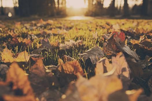 leaves nature autumn  Free Photo