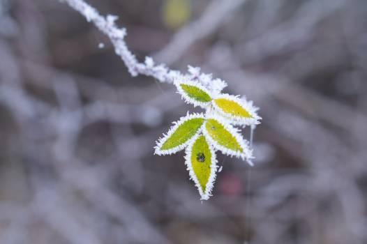 Plant Branch Leaf #218959