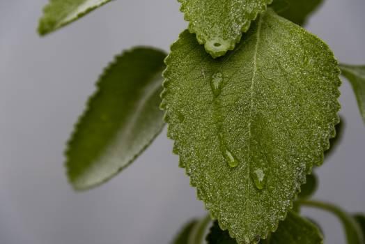 Acorn Fruit Leaf Free Photo