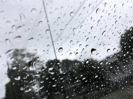 raining rain drops  Free Photo