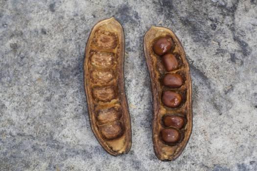 Shell Footwear Mollusk Free Photo