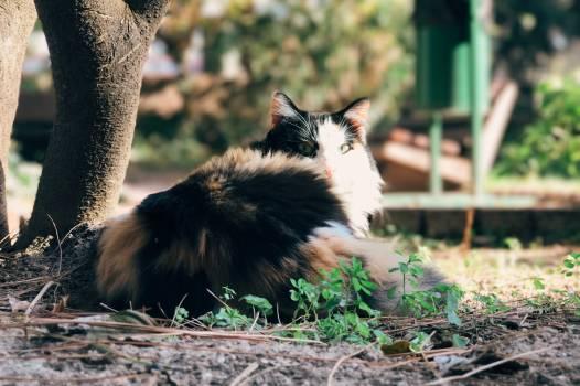 Musteline mammal Skunk Mammal #219366