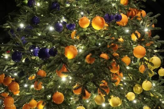 Orange Fruit Food Free Photo