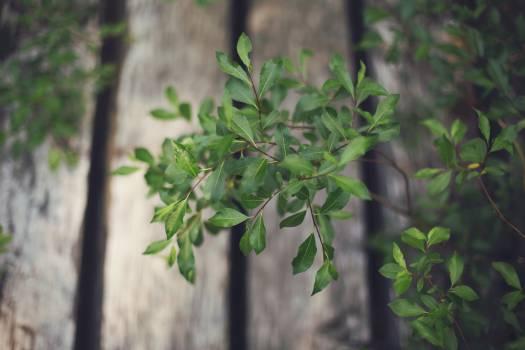 green plants leaves  #21950