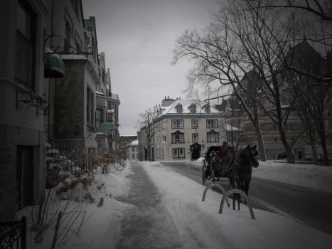 Carriage Snow Winter Free Photo