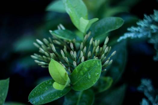green plant rain drop  Free Photo