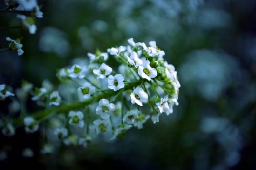 Flower Plant Spring #220502