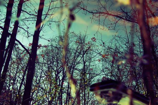 trees branches leaves  Free Photo