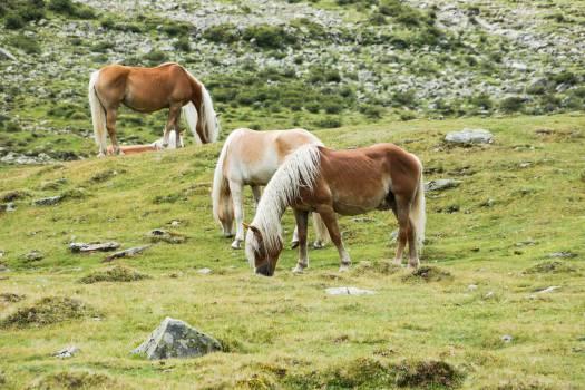 horses animals hair  #22058