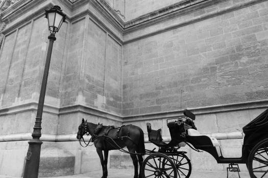 horse carriage transport  Free Photo