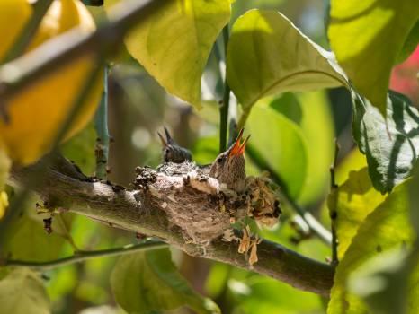 baby bird tree  #22104