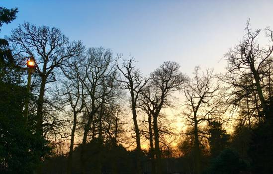 Sky Atmosphere Tree #221188