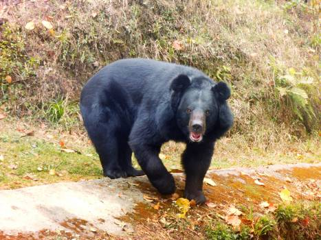 bear animal wild  #22129