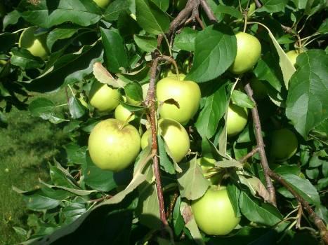 Fruit Citrus Edible fruit #221503