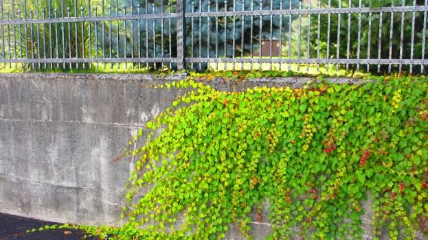 Fence Plant Landscape #221646