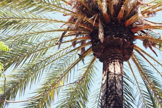 palm tree leaves bark  #22176