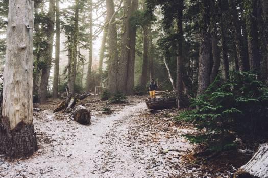 hiking trek trail  Free Photo