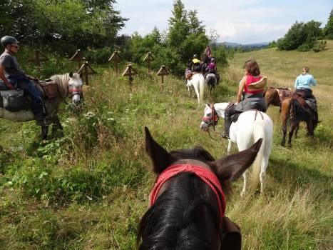 Resort Horse Grass Free Photo