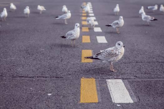 seagulls birds pavement  Free Photo
