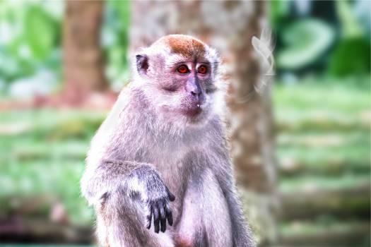 monkey animal  #22236