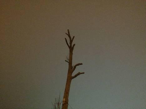 Branch Plant Leaf #222497