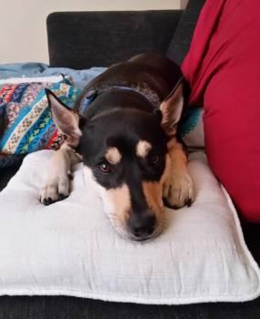 Dog Canine Animal #222850