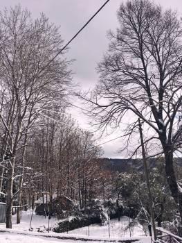 Snow Tree Weather #222916
