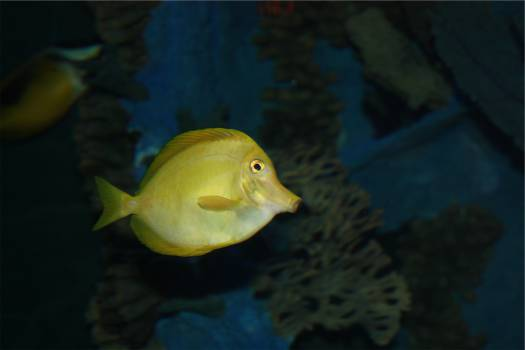 fish  #22325