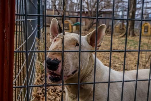Pen Dog Farm Free Photo