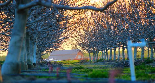 trees barn country  Free Photo