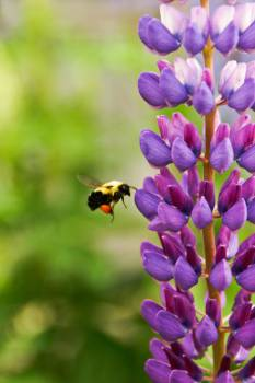 wasp bee stinger  Free Photo