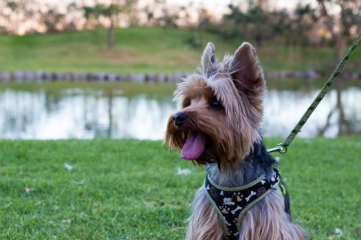 Terrier Dog Hunting dog #223734