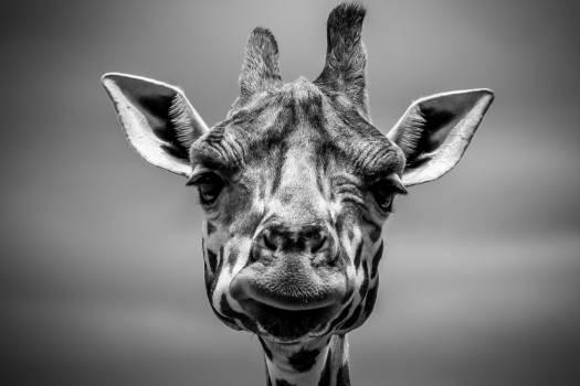 Animal Nose Mammal Free Photo