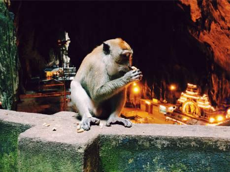 monkey animal  #22413