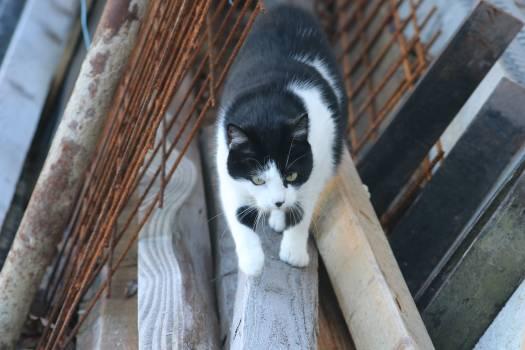 Feline Madagascar cat Lemur #224389