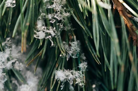 green plants snowflakes  Free Photo