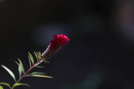 Flower Plant Leaf #224526
