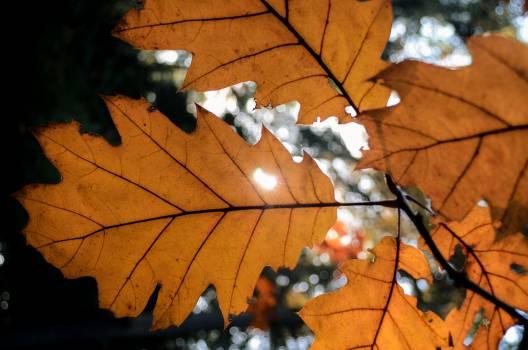 leaf autumn sunlight  #22459