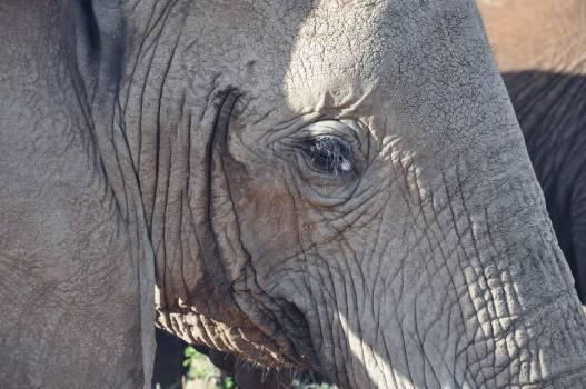 Elephant Mammal Africa #224904