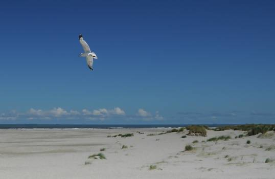 seagull bird wings  Free Photo