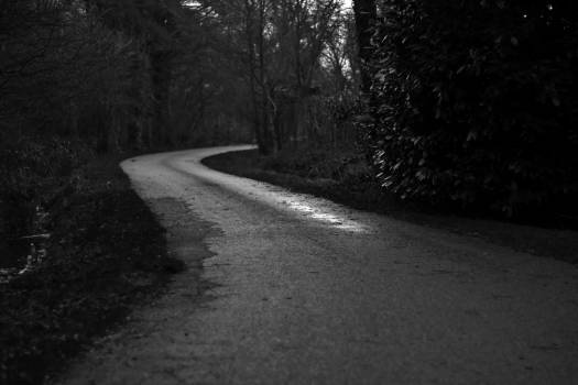 black and white trees road  Free Photo