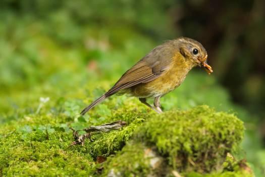 Bird Finch Beak #225598