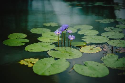Aquatic Water Garden Free Photo