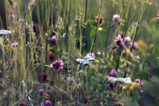 plants flowers garden  Free Photo