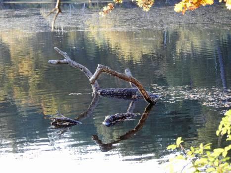 Water Lake Reflection Free Photo