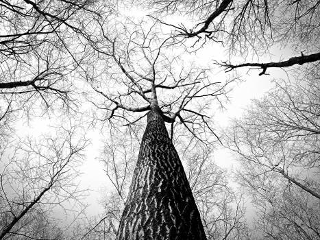 trees trunk bark  Free Photo